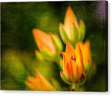 Blooming Succulents IIi Canvas Print