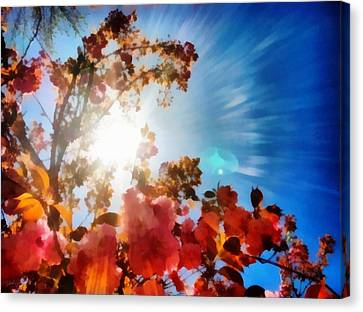 Blooming Sunlight Canvas Print by Derek Gedney