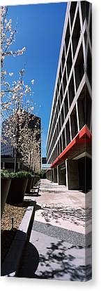 Blooming Tree In The Business District Canvas Print by Panoramic Images