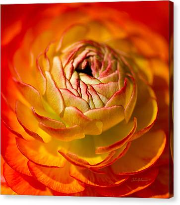 Bloomingdale Tangerine Buttercup Canvas Print by Julie Palencia