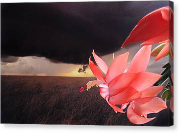 Canvas Print featuring the photograph Blooms Against Tornado by Katie Wing Vigil
