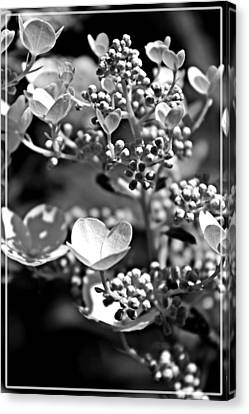 Blooms And Berries In Black And White Canvas Print
