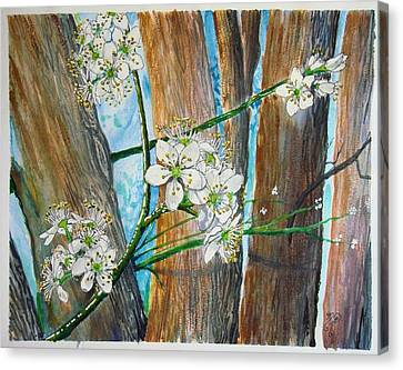 Blooms Of The Cleaveland Pear Canvas Print