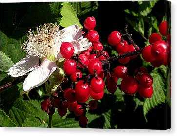 Blossom And Berries Canvas Print