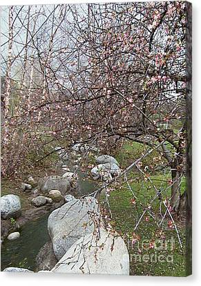 Blossom Brook Canvas Print