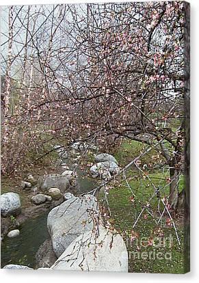 Blossom Brook Canvas Print