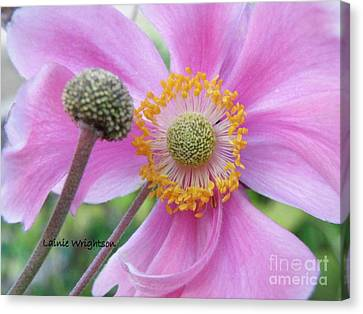 Blossom Canvas Print by Lainie Wrightson