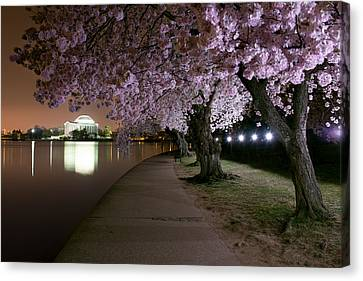 Blossom Night Fever Canvas Print by Bernard Chen
