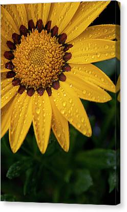Blossom Canvas Print by Ron White