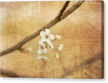 Canvas Print - Blossom by Sofia Walker