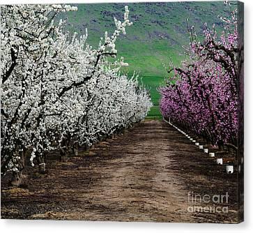 Blossom Standoff Canvas Print