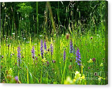 Canvas Print featuring the photograph Blossom Summer Meadow by Kennerth and Birgitta Kullman