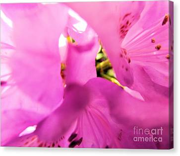 Canvas Print featuring the photograph Blossoming Beauty by Robyn King