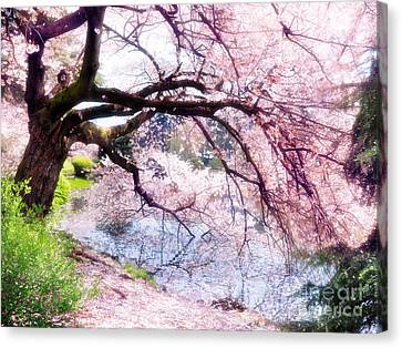 Blossoming Cherry Tree Touching Water Canvas Print by Oleksiy Maksymenko