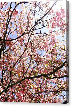 Blossoming Pink Canvas Print by Robyn King