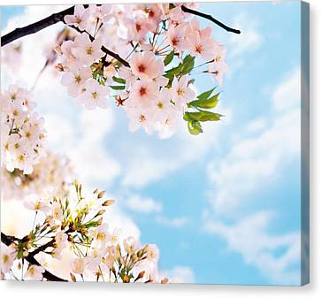 Blossoms Against Sky, Selective Focus Canvas Print by Panoramic Images