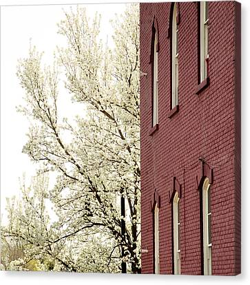 Canvas Print featuring the photograph Blossoms And Brick by Courtney Webster