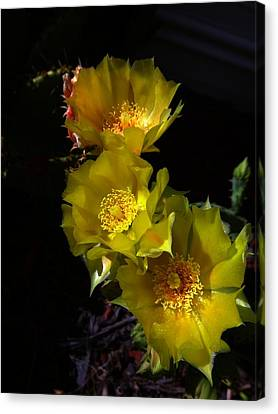 Blossoms At Dusk Canvas Print