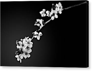 Canvas Print featuring the photograph Blossoms In Black And White by Joshua Minso