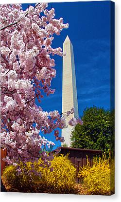 Blossoms Canvas Print by Mitch Cat