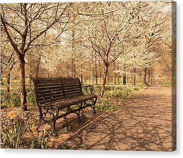 Blossoms  Canvas Print by Scott Rackers