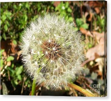 Blowing In The Wind Canvas Print by Matthew Seufer