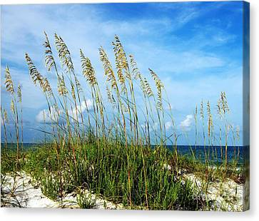 Blowing In The Wind Canvas Print by Mel Steinhauer