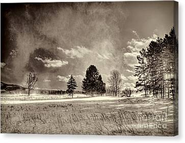 Blowing Snow Canaan Valley Canvas Print by Dan Friend