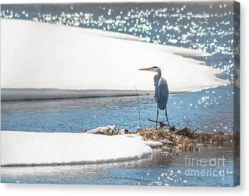 Blue And Blue Canvas Print by Cheryl Baxter