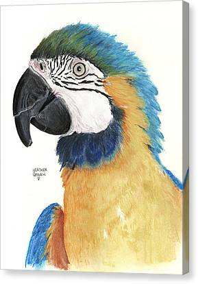 Blue And Gold Macaw Canvas Print by Heather Gessell