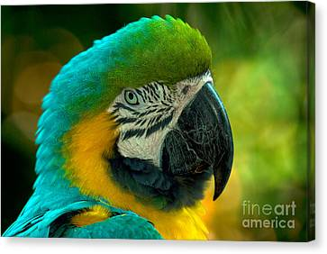 Blue And Gold Macaw Canvas Print - Blue And Gold Macaw by Mark Newman