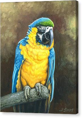 Blue And Gold Macaw Canvas Print by Paul Krapf