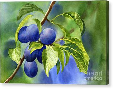 Blue And Purple Damson Plums On A Branch Canvas Print