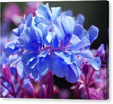 Blue And Purple Flowers Canvas Print by Matt Harang