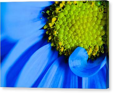 Canvas Print featuring the photograph Blue And Yellow by Erin Kohlenberg