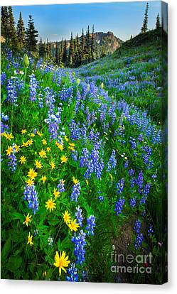 Lush Colors Canvas Print - Blue And Yellow Hillside by Inge Johnsson