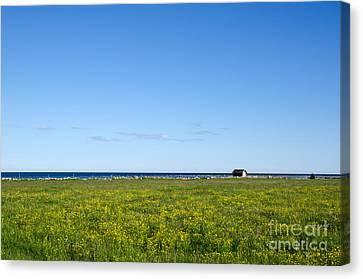 Canvas Print featuring the photograph Blue And Yellow Landscape by Kennerth and Birgitta Kullman