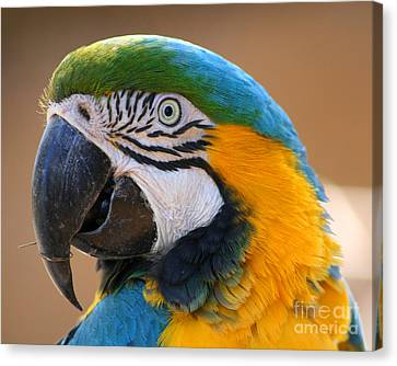 Canvas Print featuring the photograph Blue And Yellow Macaw by Bob and Jan Shriner
