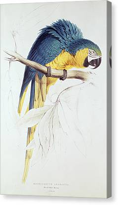 Blue And Yellow Macaw Canvas Print by Edward Lear