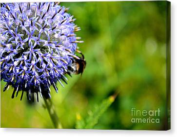 Canvas Print featuring the photograph Blue Ball Flower by Scott Lyons
