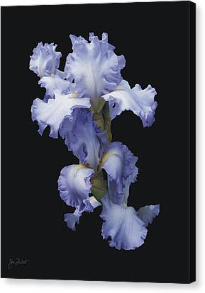 Blue Bearded Iris Canvas Print