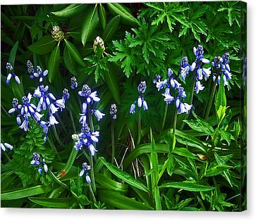 Blue Bells Canvas Print by Aimee L Maher Photography and Art Visit ALMGallerydotcom