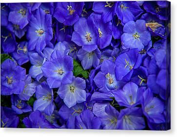 Blue Bells Carpet. Amsterdam Floral Market Canvas Print
