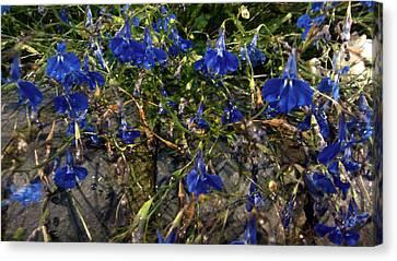 Blue Bells  Canvas Print by Diana Burlan