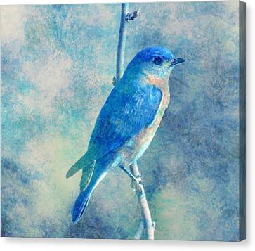 Blue Bird Blue Sky Canvas Print
