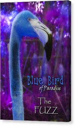 Canvas Print featuring the photograph Blue Bird Of Paradise - The Fuzz by Barbara MacPhail