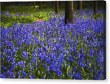 Blue Blue Bells Canvas Print by Svetlana Sewell