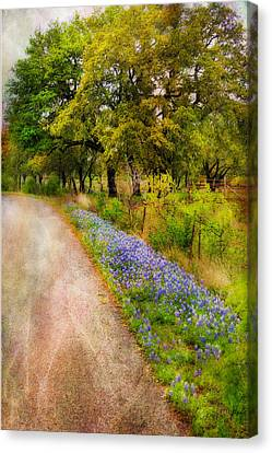 Blue Bonnet Path Canvas Print by Joan Bertucci