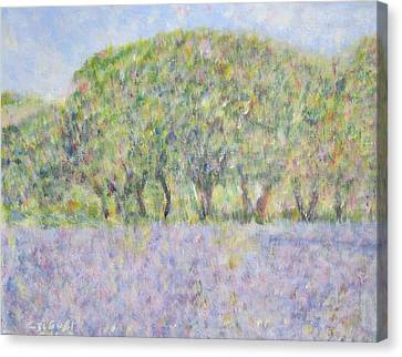 Blue Bonnets  Field In  Texas Canvas Print