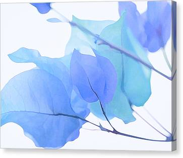 Blue Bougainvillea Canvas Print